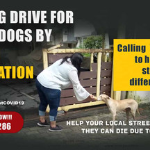 Feeding Drive for Stray Dogs by Loving Foundation