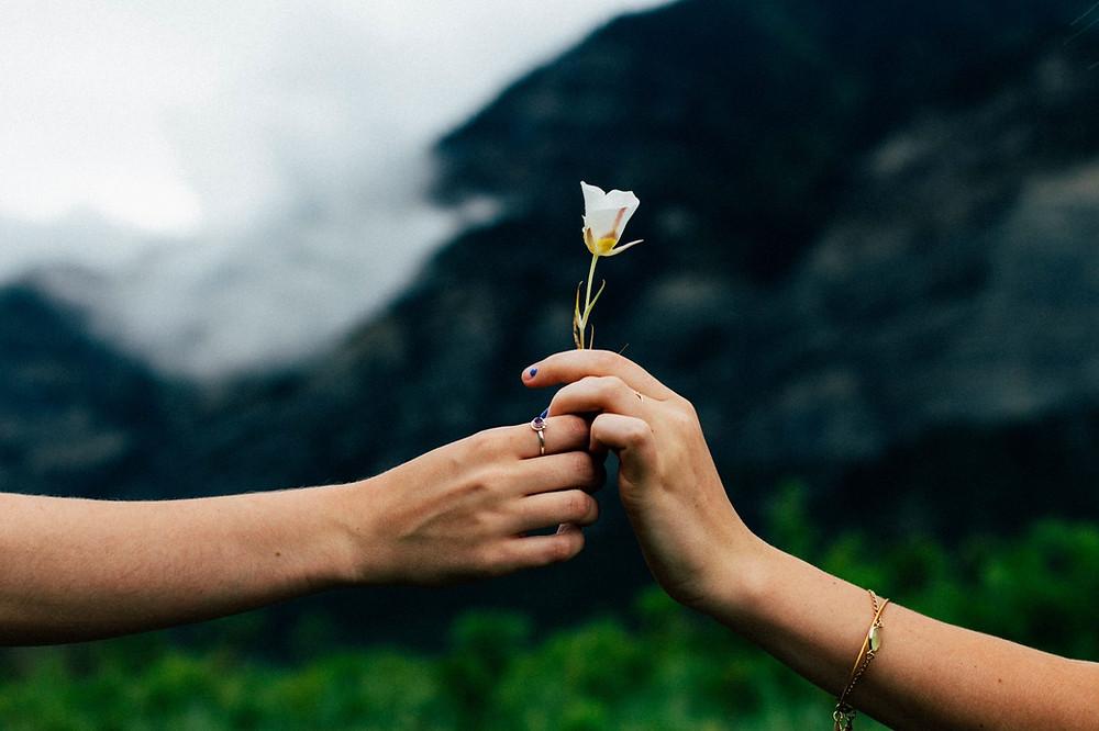 hands offering flower of forgiveness
