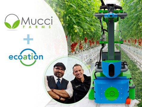 Mucci Farms Launches ecoation's OKO Immersive Platform and Enters into Research Collaboration