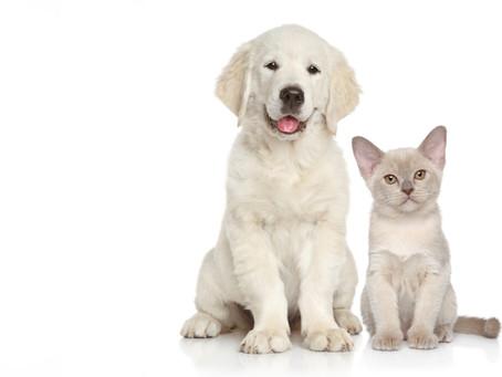 Puppy Vaccination Schedule
