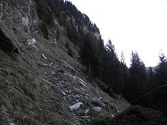 Bergwald.JPG
