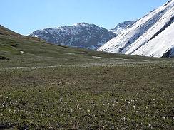 Bergwiese.JPG