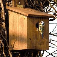 bird box.jpeg