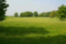 image2 - Meadow.jpg