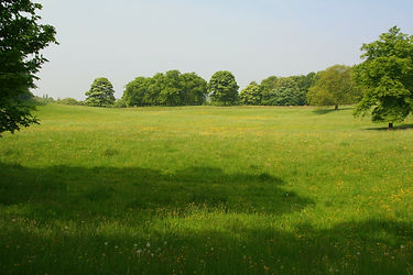 image2 - Meadow.jpg