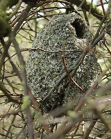 Long-tailed tit nest.jpg