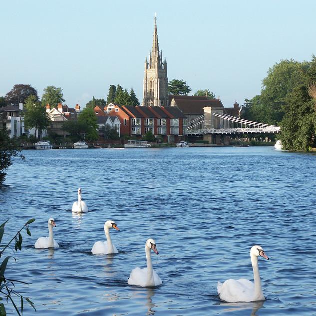 Swan Patrol.jpg