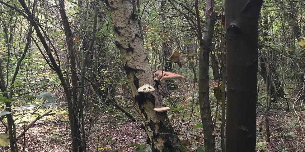 PAST EVENT: Fungi Forage