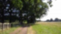 ockwells 2.jpg