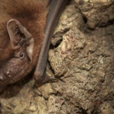Bats at Ray Mill Island