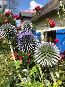frnt garden paul 2019.jpg