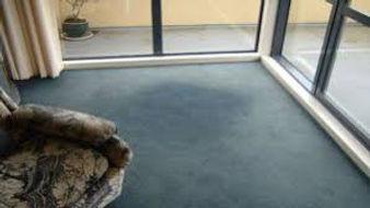 faded carpet.jpg