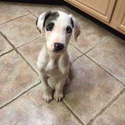 Gus as a little guy