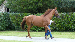 red_dubawi (1)