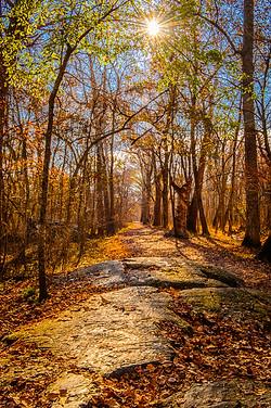 Last Days of Fall