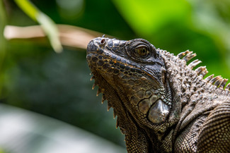 Costa Rica Wildlife Portrait Gallery