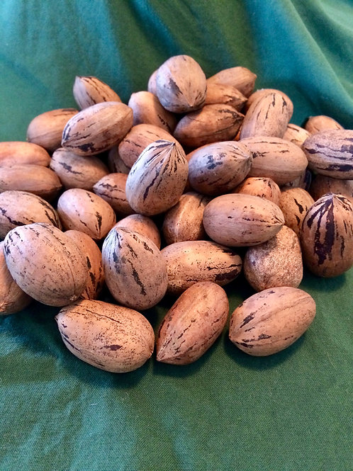 In-shell pecans (various varieties and quantities)