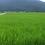 Thumbnail: 【精米】南魚沼産コシヒカリ「梅蛍」10キロ