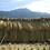 Thumbnail: 【はざがけ米|玄米】南魚沼産コシヒカリ「梅蛍」3キロ