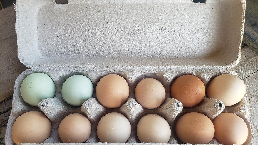 Winter Full Share Eggs