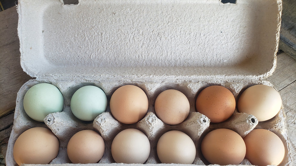 Winter Half Share Eggs