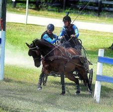 Design A Foal:  Tegan Ceri BOOKED FOR 2021