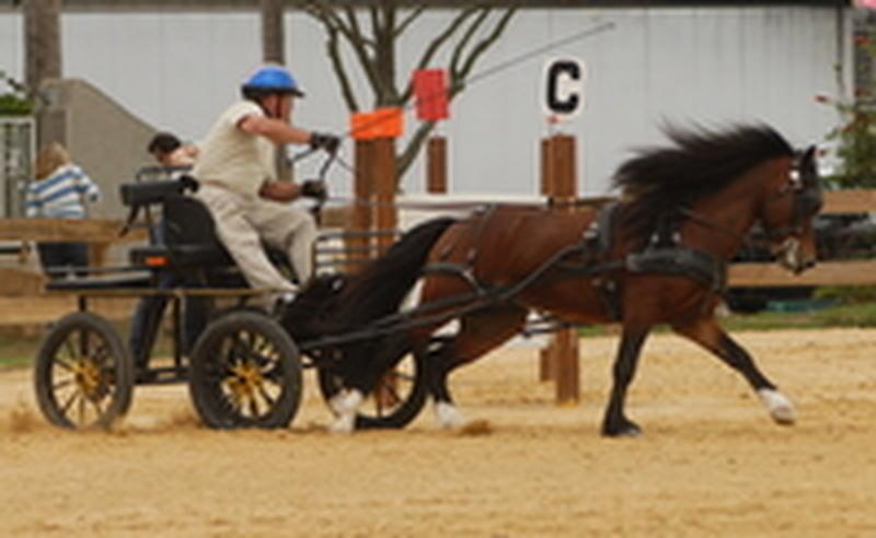 wilson at state fair 2008 089