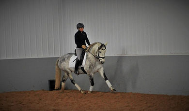 Tegan Welsh x Andalusian Dressage Pony