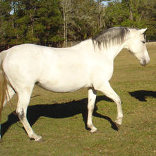 Design a Foal: HF Ciela - BOOKED FOR 2021