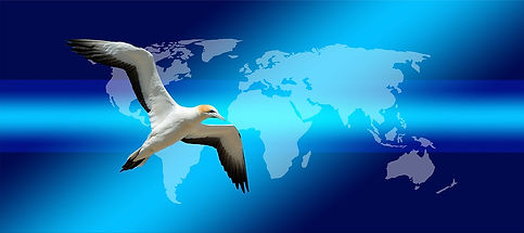 Information around the globe