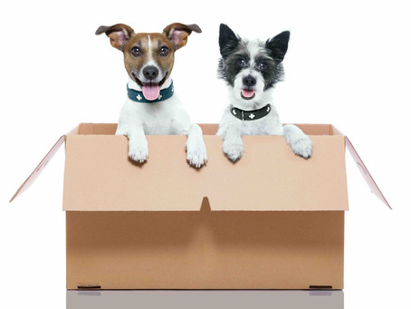 10 Frequently Asked Questions on International Moving With Pets