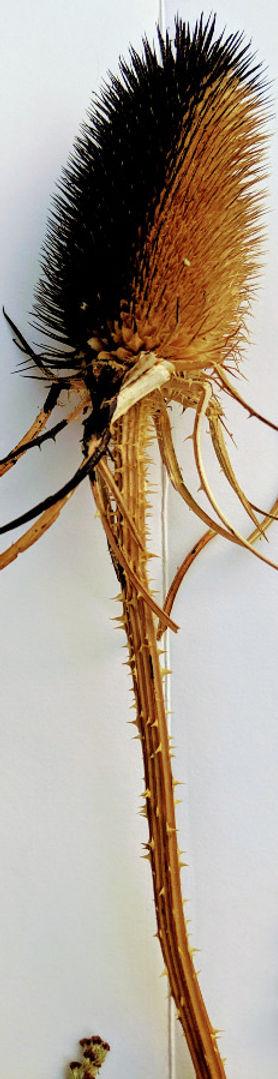 Suzi Lowe uses unusual tools to make mar
