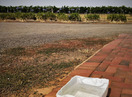 Foot Baths & Vineyards