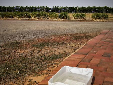 Foot Baths & Vineyards