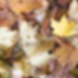 efterrsblade.172815.jpg
