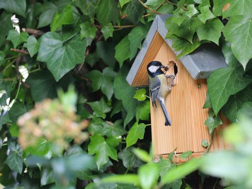 Protéger et accueillir la biodiversité chez soi