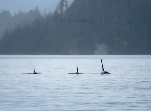 Orques et Mères