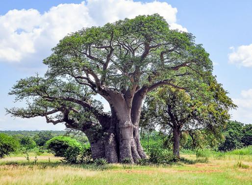 Comment les arbres peuvent-ils nous sauver ?