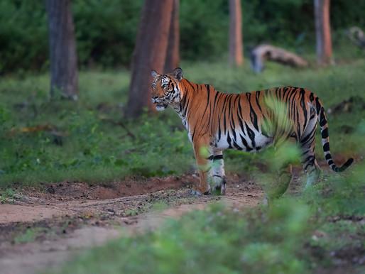 """""""L'Inde et sa relation avec le Tigre"""""""