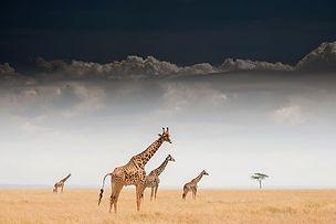 girafes-expo-troisieme-planete.jpg