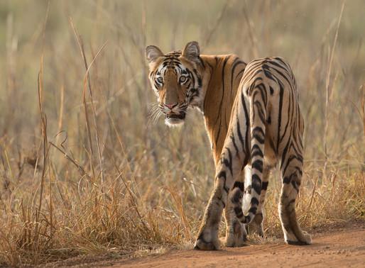 """""""L'Inde et sa relation avec le Tigre"""" par Julien BOULE"""