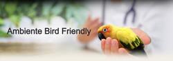 Ambiente Bird Friendly_edited