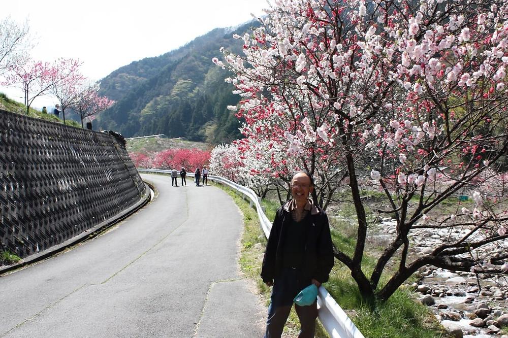 園原の4月、花桃まつり