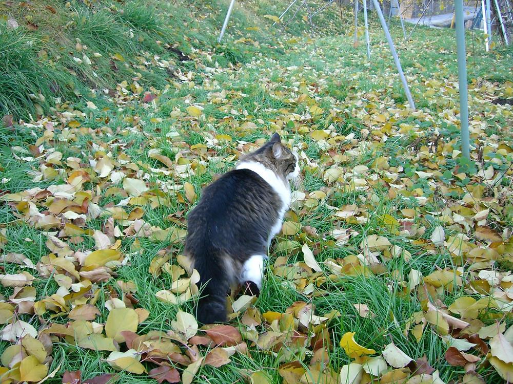 猫と落ち葉