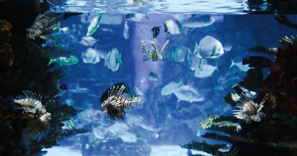 picture-of-group-of-fish-swimming-underwater-6UTXBLT.jpg