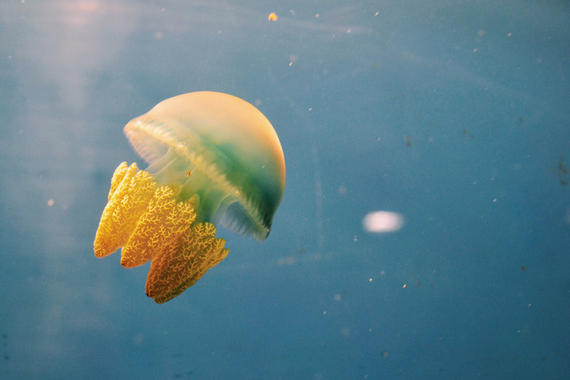 dubai-aquarium-underwater-zoo-dubai-XE5SGKX.jpg