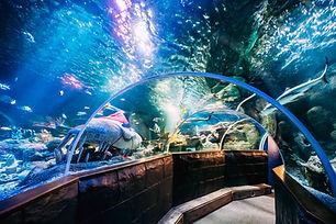 Arabian Private adventure  Under water park