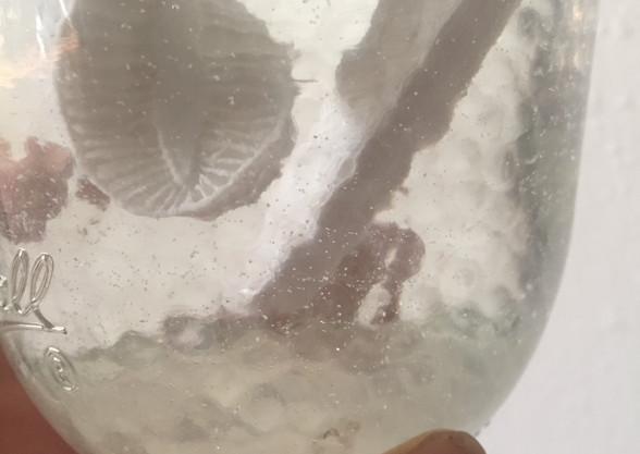 Diatoms in water beads