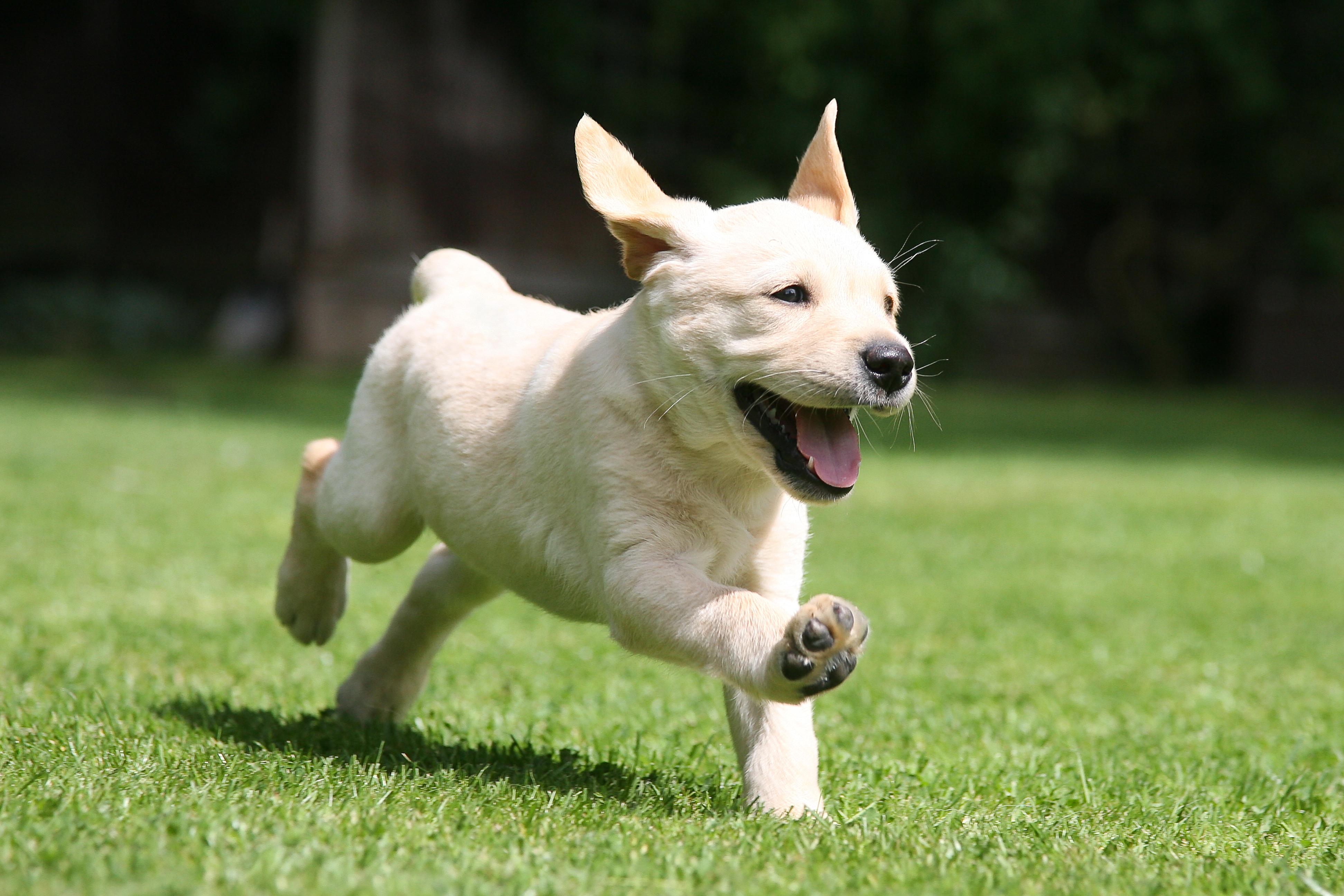dog-zoomies.jpg
