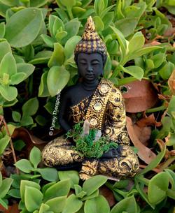 Buddha & Feng Shui Varieties